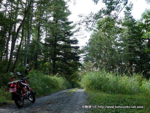 馬返付近の林道
