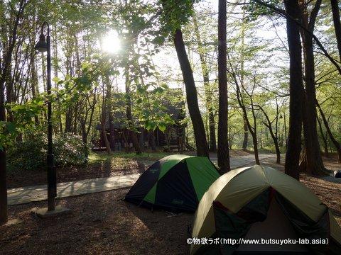 「グリーンヒル八ヶ岳」のキャンプサイト